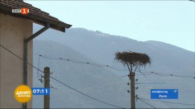 В симитлийското село Полето посрещнаха първия щъркел