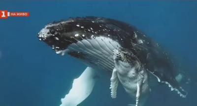 Къде може да се снимат китове и какви са тънкостите на подводната фотография?