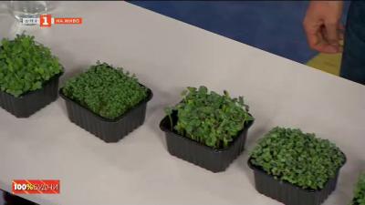 Полезните свойства на микрорастенията