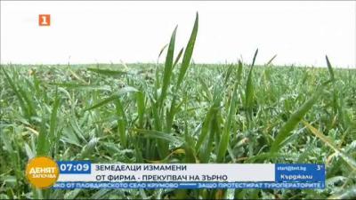 Фирма-прекупвач измами производители на зърно