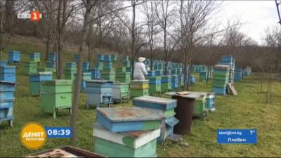 Масово измират пчелите в Бургас