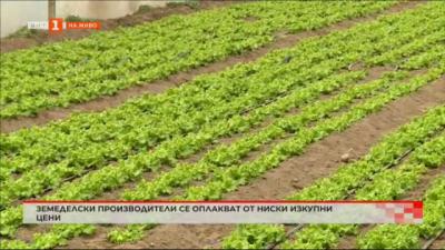 Земеделски производители се оплакват от ниски изкупни цени