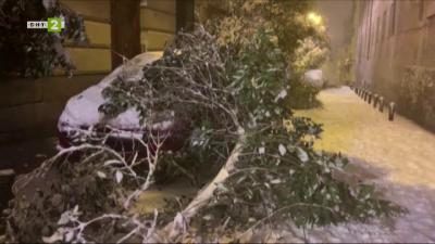 Специализиран екип клонира част от най-ценните екземпляри на дърветата, пострадали при снежна буря в Мадрид