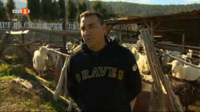 Щастлива ферма за породата малашевски дългокосмести кози