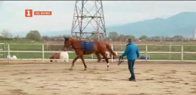 Как се отглеждат и тренират елитни коне за състезания?