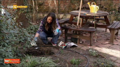 Как да засадим луковици?