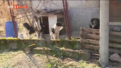 Жителите на село Българчево са притеснени от растящия брой бездомни кучета