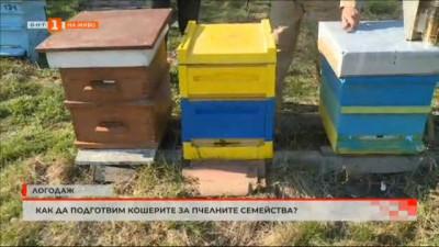 Как да подготвим кошерите за пчелните семейства