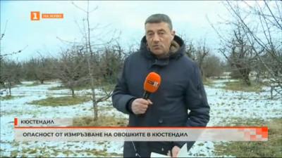 Опасност от измръзване на овошките в Кюстендил