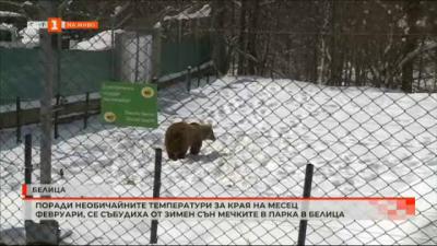 Поради необичайните температури за края на месец февруари, мечките в парка Белица се събудиха от зимен сън