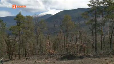 Залесяват част от изгорелите гори в Благоевградско