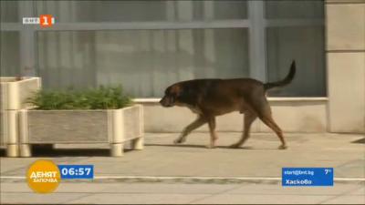 Бездомни кучета в Благоевград
