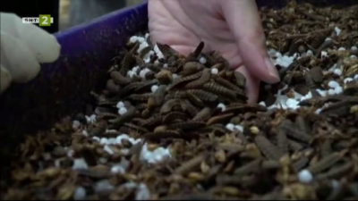 Голямото бъдеще на малките насекоми