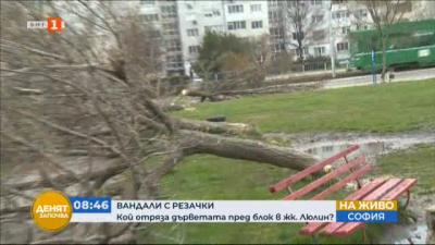 Отрязани дървета в ж.к Люлин в София