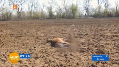 Откриха убит елен в Разградско