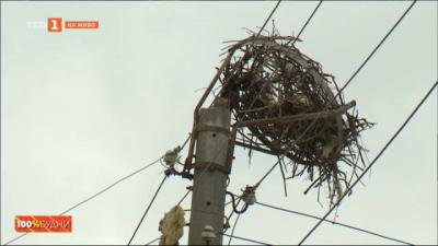 Паднало щъркелово гнездо в с. Гълъбник, жителите потърсиха помощта на 100% будни