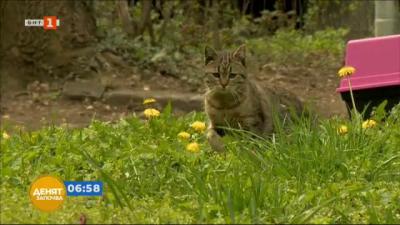 Започна преброяването на бездомните котки в столицата
