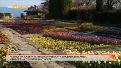 Парад на лалетата в Ботаническата градина в Балчик