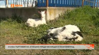 Какви са причините дни преди Великден да е слаб интересът към търговията с живи агнета в Благоевград?