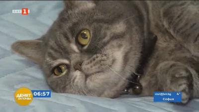 Преброяване на котките в София