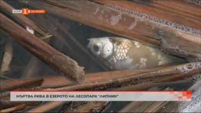 Мъртва риба в езерото на лесопарк Липник в Русе