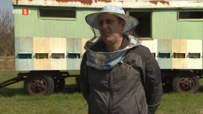 Пчели, отглеждани от богослов в Северозападна България