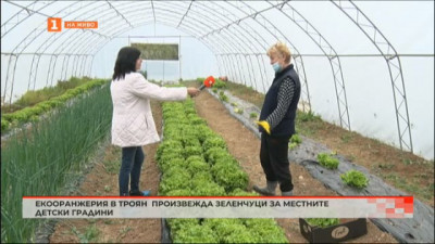 Екооранжерия в Троян произвежда зеленчуци за детските градини