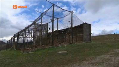 Какво стана с лешоядите, разхождащи се в центъра на Сливен?