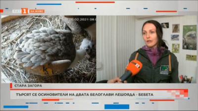 Търсят се осиновители на двата белоглави лешояда-бебета в Стара Загора