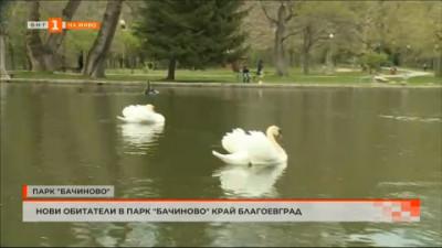 Нови обитатели в парк Бачиново край Благоевград