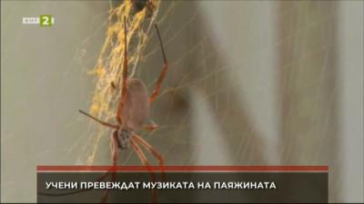 Учени превеждат музиката на паяжината