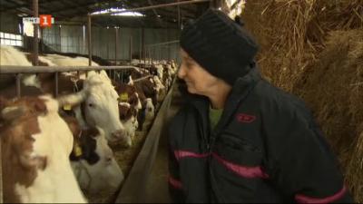 На гости на семейната ферма на фамилия Илчеви в околностите на град Първомай
