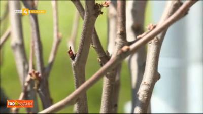 Студенти подариха дръвчета на село Аспарухово