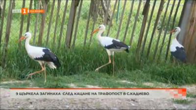 Девет щъркела загинаха след кацане на трафопост в с. Кадиево