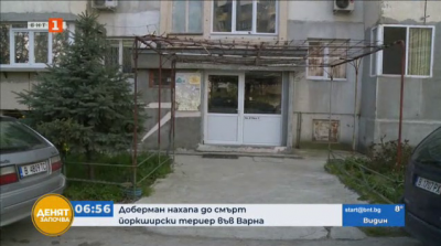 Доберман нахапа до смърт йоркширски териер във Варна