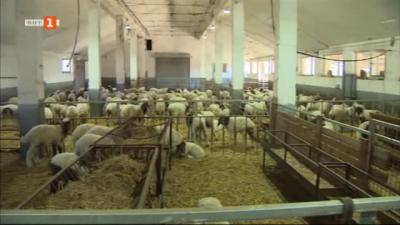 Ферма за овце в с. Белоградец