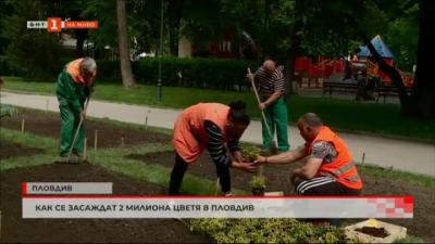 Как се засаждат 2 милиона цветя в Пловдив