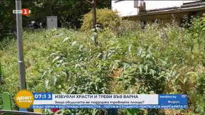 Избуяла трева и храсти във Варна