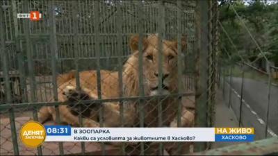 Какви са условията за животните в хасковския зоокът Кенана?