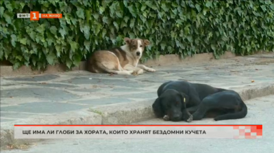 Забраняват храненето на безстопанствени кучета в Кричим?