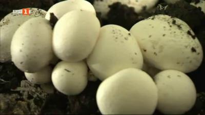 Тази година няма гъби в Еленския Балкан, заради сушата