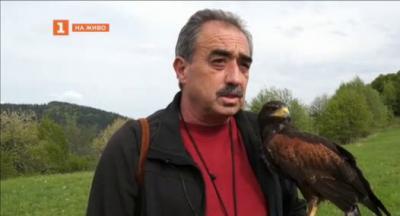 Соколар в Смолянско ходи на работа с птицата си