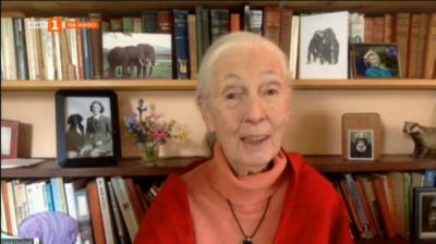 Джейн и шимпанзетата - чудната история на Джейн Гудол, която живя в джунглата