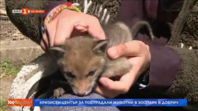Кризисен център за пострадали животни в зоопарка в Добрич