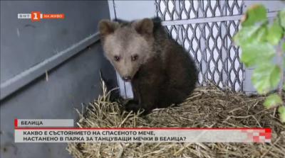 Спасеното мече в Смолянско е настанено в Парка за танцуващи мечки