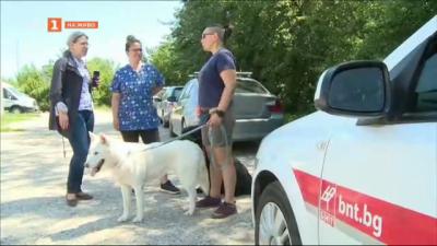 Ветеринари съветват да следите какво поглъща кучето ви по време на разходка