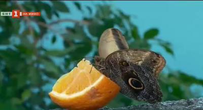 Тропически пеперуди отново летят в Природонаучния музей в Пловдив