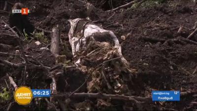 По зрителски сигнал: Кой закопава мъртви животни в землището на Марково?