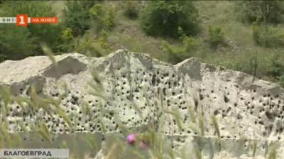 Колония от брегови лястовици край река Струма