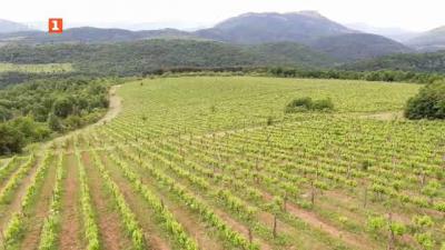 Красотата и качествата на българското вино